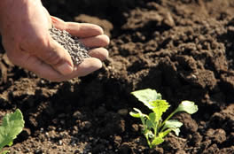 Organic fertilizer raw materials